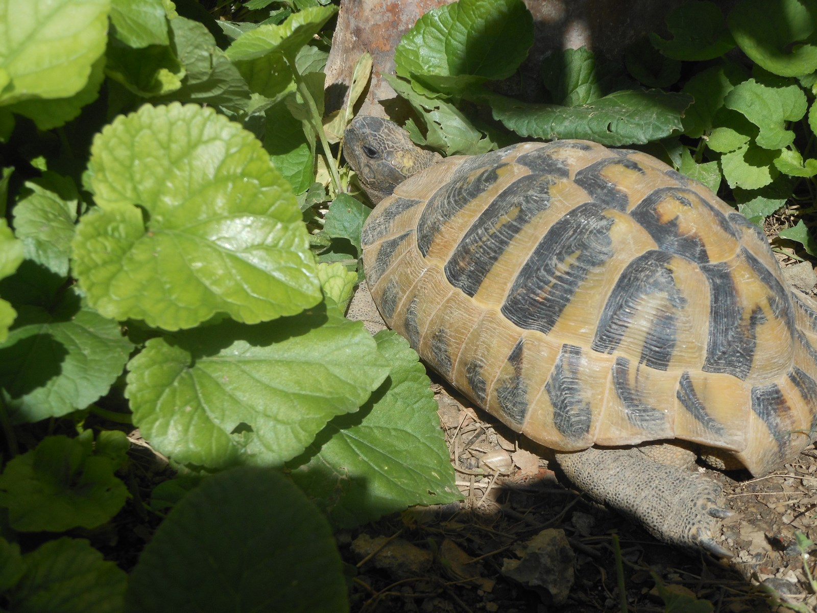 tortues (2) (Copier)